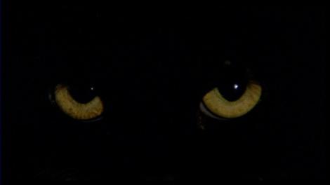 vlcsnap-2015-04-23-09h57m49s134