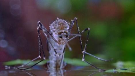 mosquitobr-01
