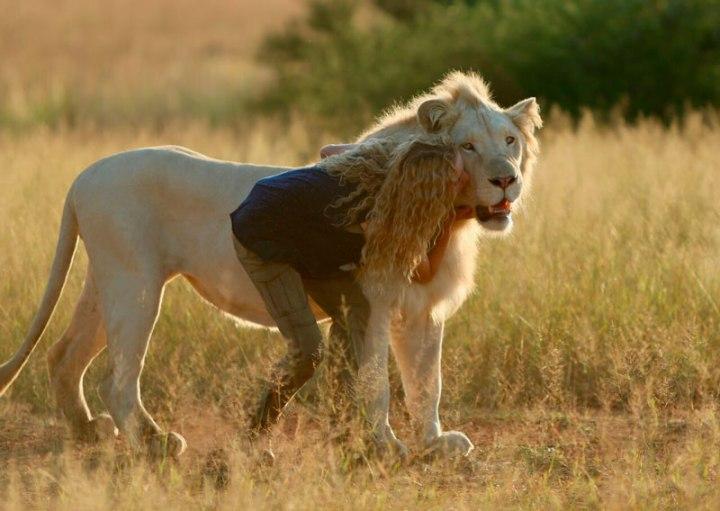 mia y el león blanco-10