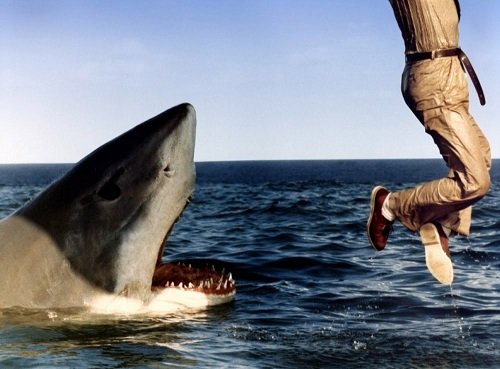 Tiburón 3-6